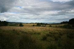 fields guld- Arkivbild