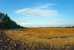 fields guld Arkivfoton