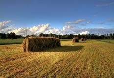 fields guld Arkivbild
