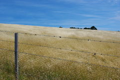 fields guld Arkivbilder