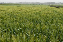 Fields in Hanadiv valley, Israel Stock Photo