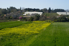Fields in Hanadiv valley, Israel. Fields in spring at Hanadiv valley, near the town of Givat Ada Israel Stock Photo