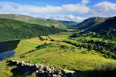 The fields of Hartsop. Orange coloured sheep on Harstop Dodd Stock Photography