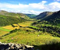 The fields of Hartsop. Orange coloured sheep on Harstop Dodd Royalty Free Stock Images