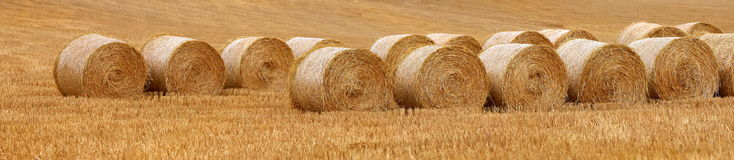 Fields after harvest. Panorama of fields after harvest in late August in Alava, Spain Stock Image