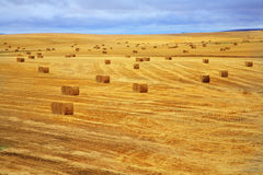 The fields after a harvest and stacks Royalty Free Stock Images