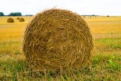 fields harvesting Поле земледелия с небом Сельская природа в сельскохозяйственном угодье Солома на луге стоковые изображения