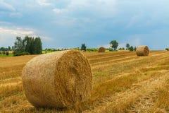 fields harvesting 麦子黄色金黄收获在夏天 与湖的美好的风景背景的 免版税图库摄影
