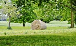 fields harvesting Стоковое Фото