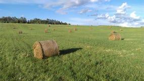 fields harvesting Стоковые Изображения