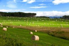 fields harvesting Стоковая Фотография RF