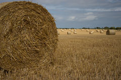 Fields of hay. Hay bales rolled up and drying in the golden fields stock images