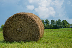 Fields of Hay royalty free stock images