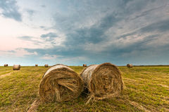 Fields of hay roll Royalty Free Stock Image