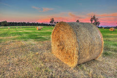 Fields of hay Royalty Free Stock Image