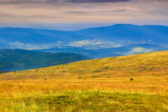 Fields on high mountain. Yellow grass and lavender fields on high mountain meadows Royalty Free Stock Photography