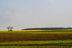Free Fields In Morning Light Stock Images - 40349804