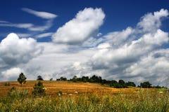 fields infödingen Royaltyfri Bild