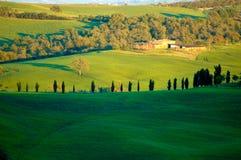 fields italienare Royaltyfria Bilder