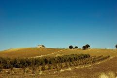 fields italy olivgrön sicily Royaltyfri Fotografi