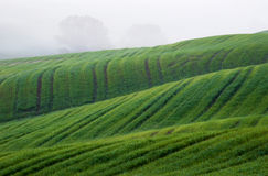 Fields in Italy - Tuscany in spring Royalty Free Stock Photos