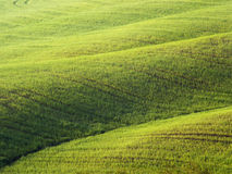 Fields in Italy - Tuscany in spring Stock Photo