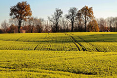 Fields of La Dombes Stock Image