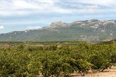Fields of La Rioja Stock Images