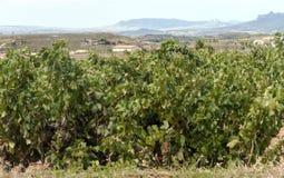 Fields of La Rioja Royalty Free Stock Photography