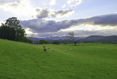 Fields in the lake district Stock Photography