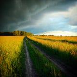 Fields Landscape Royalty Free Stock Photography