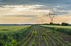Fields landscape. In evening light Royalty Free Stock Image