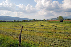 Fields landscape Stock Photos