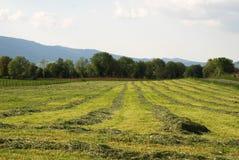 Fields landscape Royalty Free Stock Image