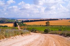 Fields and landscape Israel Royalty Free Stock Image