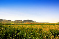 Fields landscape. Italy Royalty Free Stock Image