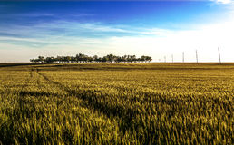Fields landscape in Spain Royalty Free Stock Photography