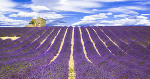 Fields of lavander in Provance, France Stock Photos