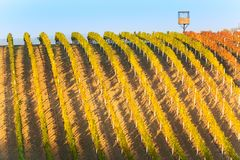 Fields and lines of autumn vineyards with blue sky and hunting tower in South Moravia, Czech Republic. Amazing autumn landscape of. The Czech Tuscany South Royalty Free Stock Photography