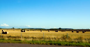 Fields of Lithuania Stock Photos