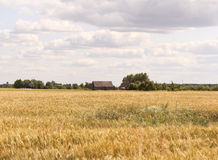 Fields of Lithuania. Summer fields of Lithuania countryside stock images