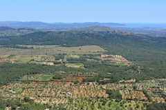 Fields of Majorca Stock Photography