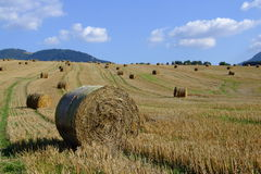 The fields Stock Photography