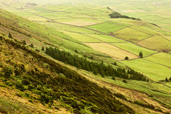 Fields and Meadows. Fields on Terceira on Azores Stock Image