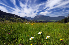 Fields and meadows in Alps. Beautiful landscape with fields and meadows in Austrian Alps Royalty Free Stock Photos