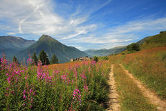 Fields and meadows in Alps. Royalty Free Stock Photo