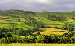 Fields and Meadows, Cumbria. The fields and meadows of the lake district agricultural landscape. Taken with a late evening summer sun, gilding the rolling hills stock images