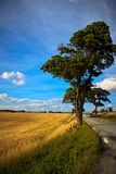 Fields and meadows of Denmark Royalty Free Stock Images