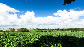 Fields, meadows and forest Royalty Free Stock Images