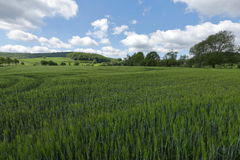 Fields and meadows in Germany Royalty Free Stock Photo
